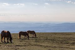 吃草在一个宽谷上的一座山的马 库存图片