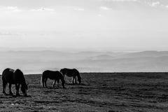 吃草在一个宽谷上的一座山的马 免版税库存照片
