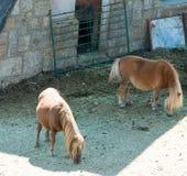 吃草在一座山的草甸的马在西班牙 免版税库存图片