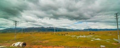 吃草在与山麓小丘的领域的母牛对小山 库存照片