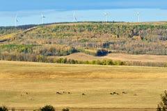 吃草在与马和风轮机的秋天 免版税库存图片