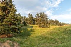 吃草在倾斜的马在森林旁边 免版税库存照片