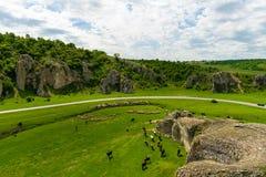 吃草在多布罗加峡谷地区,罗马尼亚的母牛和山羊 免版税图库摄影