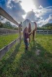 吃草在它的小牧场的马 免版税库存图片