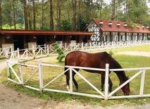 吃草在室外小牧场的马 库存图片