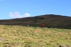 吃草在山的三匹马 免版税库存照片