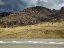 吃草在山的绵羊牧群  库存图片