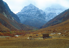 吃草在山背景的母牛  免版税图库摄影