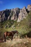 吃草在山背景的马 克里米亚, Dimerji 免版税库存图片