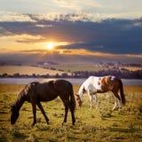 吃草在日落的马 免版税库存照片