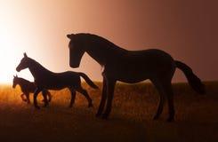 吃草在日落背景的三匹马 免版税库存照片