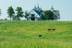 吃草在曼彻斯特农场的马bluegrass在列克星敦肯塔基 库存图片