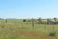 吃草在有储蓄装货舷梯的一个小牧场的绵羊 免版税图库摄影