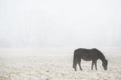 吃草在有雾的领域的马 免版税库存照片