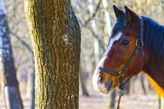 吃草在森林里的马 免版税库存图片