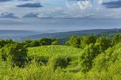 吃草在比利牛斯风景的绵羊 库存照片