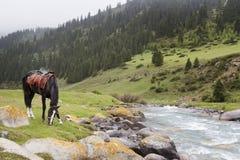 吃草在河附近的马 吉尔吉斯斯坦 图库摄影