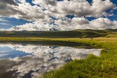 吃草在湖附近的两匹马 库存图片