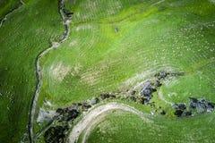吃草在牧场地的绵羊在新西兰 免版税库存图片