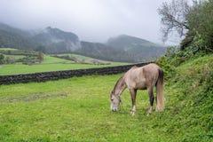 吃草在牧场地的马在山下在多云天期间 免版税库存图片