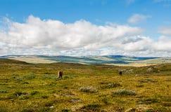 吃草在的两匹马山口一个晴天 库存照片