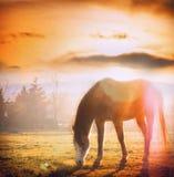 吃草在秋天草甸的日落的马 库存图片