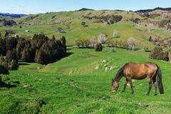 吃草在美丽如画的农田的马 免版税库存照片