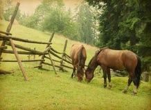 吃草在草甸的二匹马 库存照片