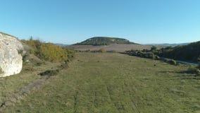 吃草在草甸的母牛牧群在路附近在岩石小山下 射击 美妙的乡下风景 股票录像