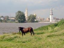 吃草在草甸的马在池塘附近 Nevyansk 俄国 库存照片