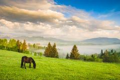 吃草在草甸的马 免版税图库摄影