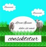 吃草在草甸的绵羊 免版税库存图片