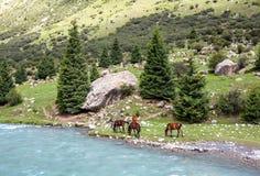 吃草在蓝色山河的四匹马 库存照片