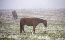 吃草在薄雾秋天有雾的早晨的马 免版税库存照片