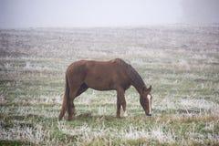 吃草在薄雾秋天有雾的早晨的马 免版税库存图片