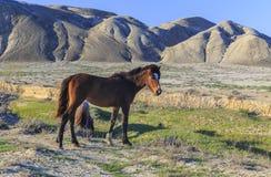 吃草在谷的马 库存照片