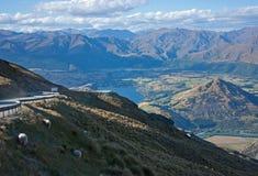 吃草在路旁边的绵羊导致Remarkables滑雪场在昆斯敦附近在新西兰 在背景中震惊 免版税库存照片