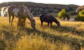 吃草在阵营外面的马 库存图片