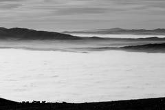 吃草在雾fil海的一座山顶部的有些马  免版税图库摄影