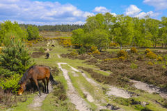 吃草在领域的马牧群 免版税图库摄影