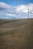 吃草在风轮机下的牛 图库摄影