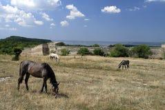 吃草在洞城市Chufut无头甘蓝前面的马 免版税库存图片