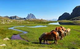 吃草在Anayet高原,西班牙语比利牛斯,阿拉贡,西班牙的马 免版税库存照片