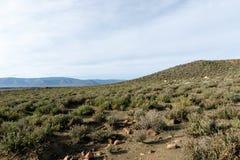吃草在Tankwa南部非洲的干旱台地高原的绵羊 免版税库存照片