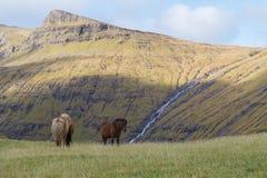 吃草有风景看法对山,法罗群岛,丹麦的Ponys 库存照片