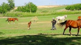 吃草的摄影师和的马 股票视频