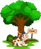 吃草的滑稽的母牛动画片 图库摄影