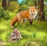 吃草的灰色野兔。 狩猎狐狸在森林里。 免版税库存图片