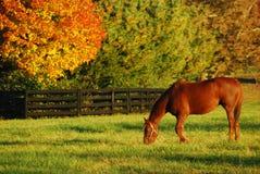吃草的秋天 库存图片