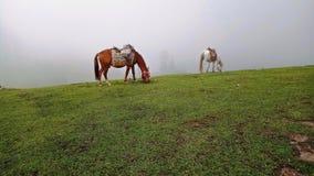 吃草的马在上流10,032ft从看见平实 图库摄影